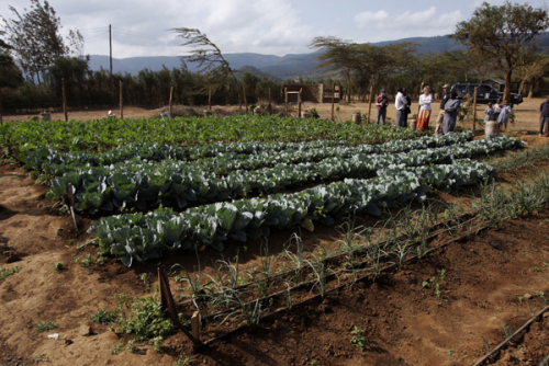 drip-irrigation-project-A-Well-Fed-World